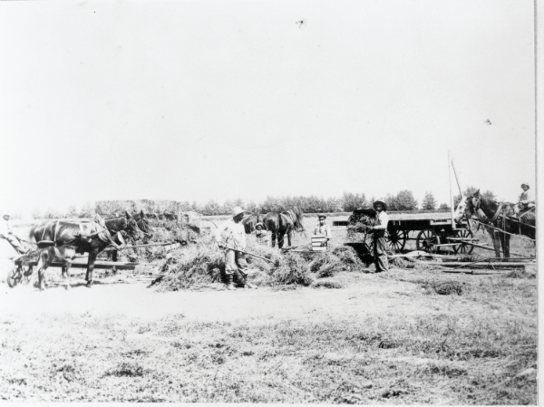 Blackdom Township farmers, 1911. Courtesy New Mexico State University Library, Rio Grande Historical Collection, neg. no. RG98-103-001.